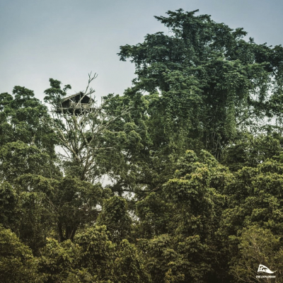 Between earth and sky, a life in the canopy · Discovered only about 40 years ago, the Korowai tribe lives in houses perched between 32 and 131ft (10-40m).In 2019, The Explorers went on a journey to share a once-in-a-lifetime experience with the Korowai people and got the chance to learn how and why they construct their extraordinary habitat.Discover this incredible journey on our app! . © 📸 @valentinpacaut / @theexplorersofficial . #theexplorers #upinthetrees #tree #forest #canopy #banyan #gianttree #korowai #westpapua #indonesia #asia #earthinventory #exploration #discovery #explore #expeditionearth #climbing #adventure #aventure #papua
