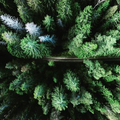 Earth from above 🙃 · Mesmerizing drone shot of a Swedish forest landscape by explorer @gerandeklerk. . © 📸 @gerandeklerk - Geran de Klerk . #theexplorers #weareexplorers #explore #earthfromabove #sweden #trees #forest #drone #neverstopexploring